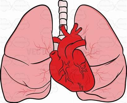 Lungs Heart Clipart Appear Would Cartoon Vectortoons