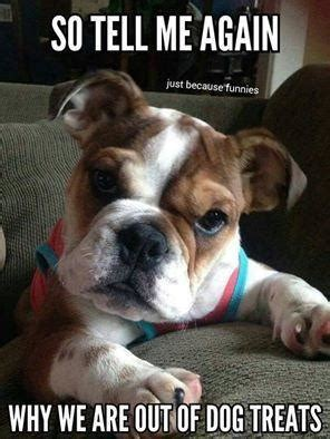 Monday Dog Meme - dog meme monday funny dog memes dog treat meme dog blog bullwrinkles canada