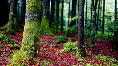 hd wallpaper forest moss close