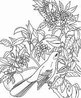 Tropical Coloring Pages Rainforest Hawaiian Flower State Leaves Mockingbird Printable Bird Plants Jungle Florida Hawaii Flowers Tree Realistic Amazon Puppy sketch template