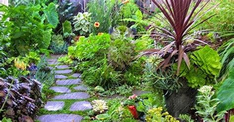 tanaman hias halaman rumah manfaatnya