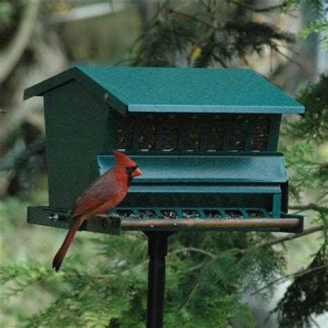 absolute squirrel proof feeder contemporary bird
