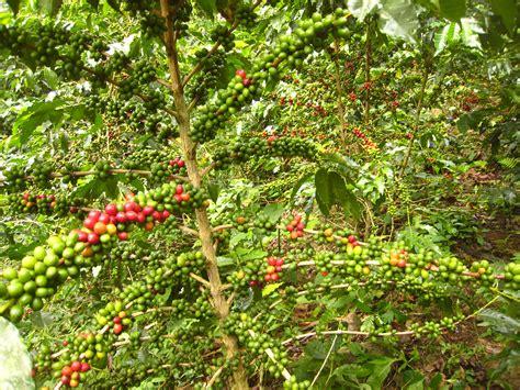 Joni In Bolivia Death Wish Coffee Kettle Bulletproof Nutritional Info With Coconut Oil Distributor Istanbul Headquarters Careers Dieta