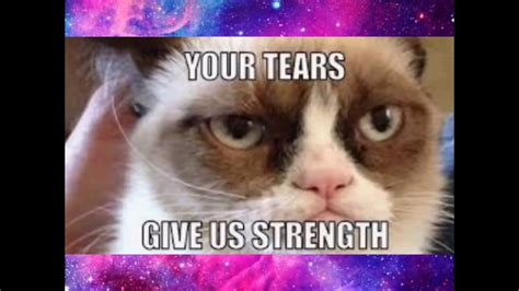 Clean memes are all over the internet, and we have picked out the best out of them for you guys. Funniest grumpy cat memes 😂 clean - YouTube