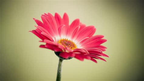 40 beautiful flower wallpapers free to download godfather style