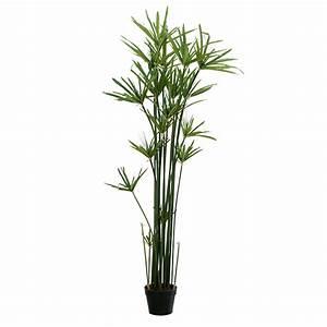 Pot Pour Plante Intérieur : pot interieur plante bambou d 39 int rieur plante 12cm pot autres marques jardinerie truffaut ~ Melissatoandfro.com Idées de Décoration