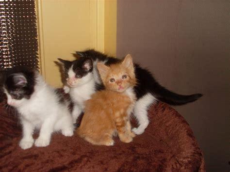 petit canape pas cher donne chatons gratuit 42110 feurs don chats et chatons