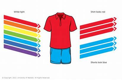 Colours Shirt Shorts Does Clipart Object Science