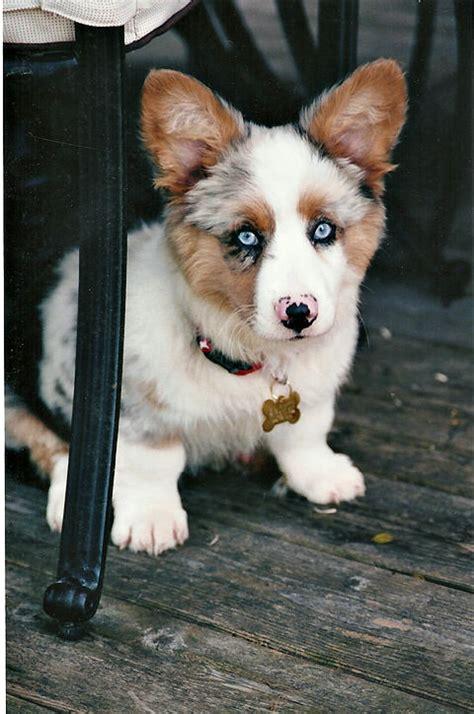 Augi - My Dog Breeders