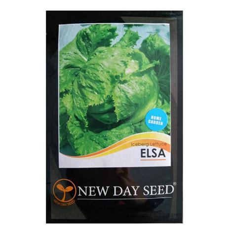 benih selada elsa iceberg lettuce 0 5 gram new day