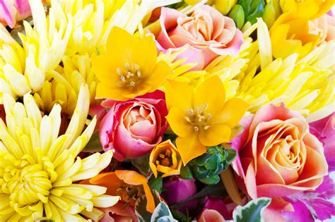 beautiful floral background gallery yopriceville high