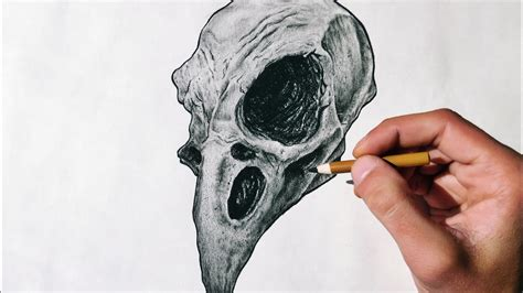 animal skull drawing time lapse youtube