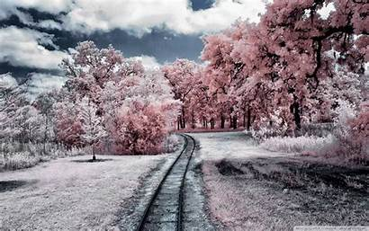 Nature Breathtaking Wallpapers Pink Woods Landscapes Views