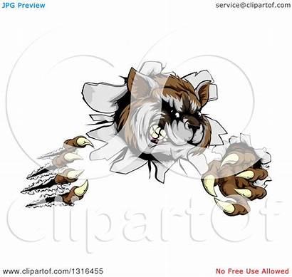 Raccoon Monster Vicious Illustration Shredding Clipart Royalty