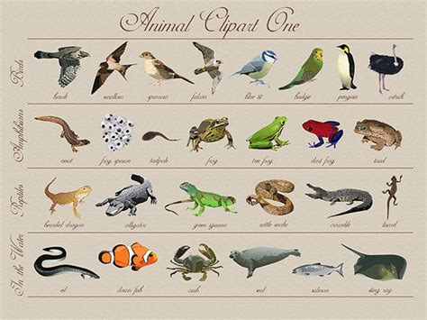 clipart animals realistic   cliparts