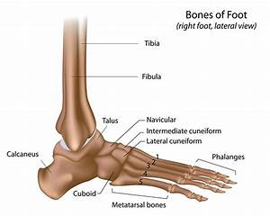 Foot  U0026 Ankle Injuries And Treatment