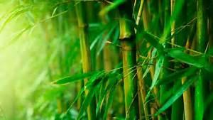 Wie Schnell Wächst Bambus : nachhaltige kleidung aus bambus f r ihr k rperliches und seelisches wohlbefinden ~ Frokenaadalensverden.com Haus und Dekorationen