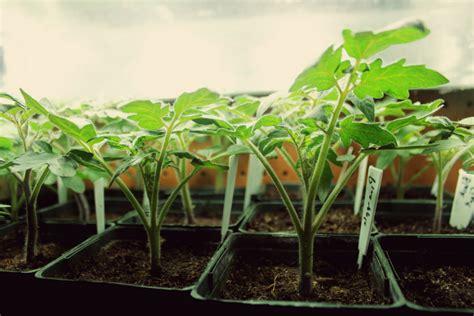 best grow lights for seedlings top 28 best grow lights for vegetables best grow