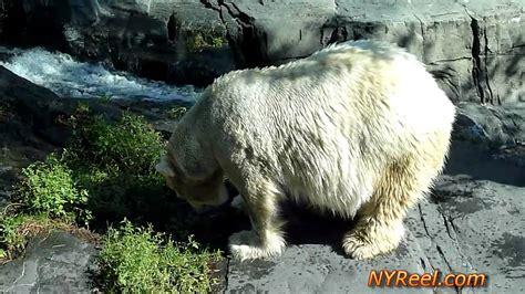 zoo york central park