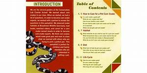 A Question  U0026 Answer Pamphlet About Pet Corn Snakes