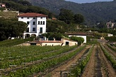 Catalonia, land of prestigious wines in Spain - Unique ...