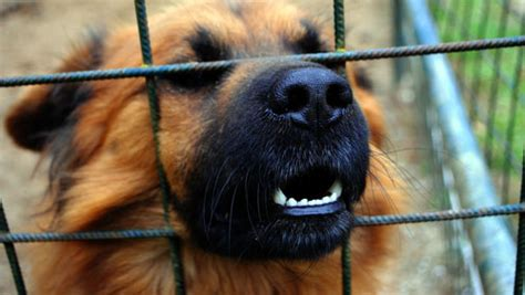 Cani In Gabbia - notizie cani news animaliste