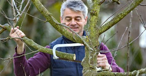 apfelbaum schneiden zeitpunkt apfelbaum schneiden tipps f 252 r jede baumgr 246 223 e mein