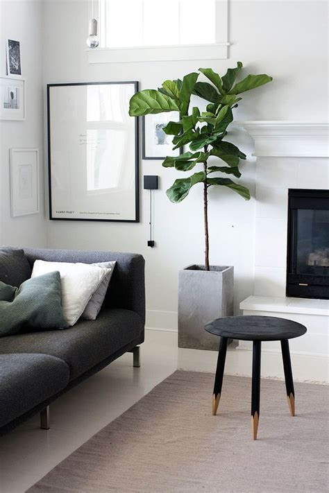 Images Of Living Room Plants by 17 Best Ideas About Living Room Plants On
