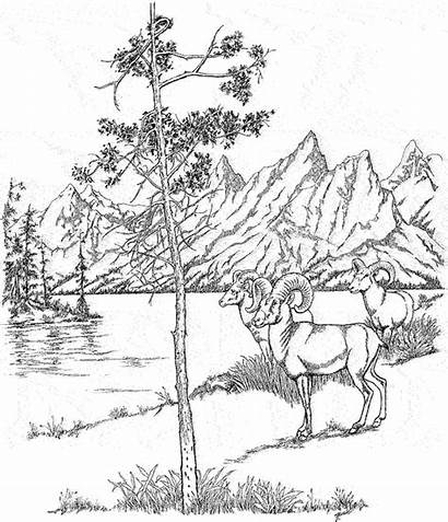 Coloring Pages Landscape Teton National Woods Yellowstone
