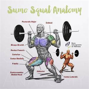 Anatomy  U0026  Exercises  U2013 Gym  Workout Chart  Ud83d Udcaasumo  Squat