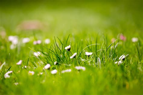 beautiful green grass field hd wallpapers