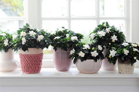 Die Fensterbank Mehr Als Eine Abstellflaeche Fuer Blumen by Fensterbank Deko Die Farben Der Natur Durch Pflanzen
