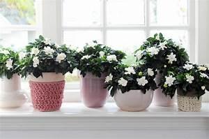 Zimmerpflanzen Für Kinderzimmer : bl hende zimmerpflanzen f r einen magischen und frischen duft ~ Orissabook.com Haus und Dekorationen