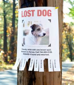 how to find lost cat finding a lost pet how to find a missing cat or