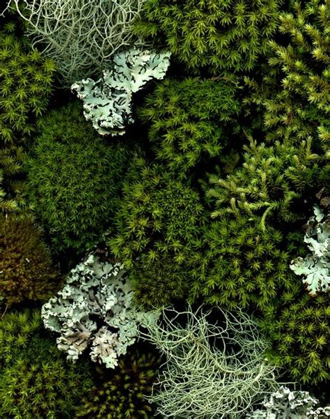 propagating moss 2268 best plants images on pinterest cactus plants succulents and succulent plants