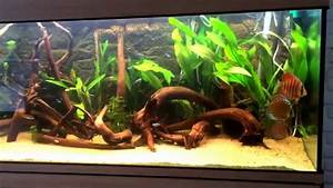 Aquariumplanten te koop