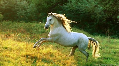 white horse running  hd wallpapers