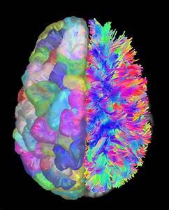Ucr Today  Brain Nodes Vertical