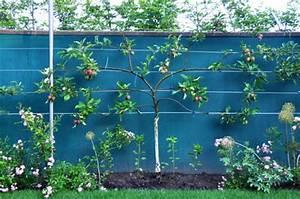 Spalierobst Pflanzen Anlegen Und Schneiden Sorten Tipps
