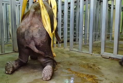 zoos worst elephants