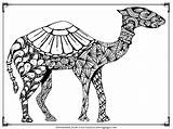 Camel Coloring Pages Printable Adult Camels Animals Realistic Clipartmag Downloads Want Visit sketch template