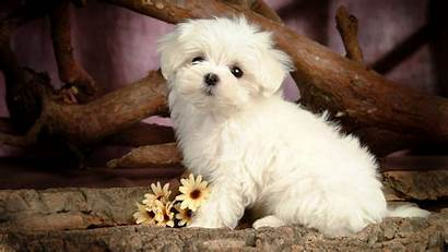 Dog Wallpapers Puppy Resolucion