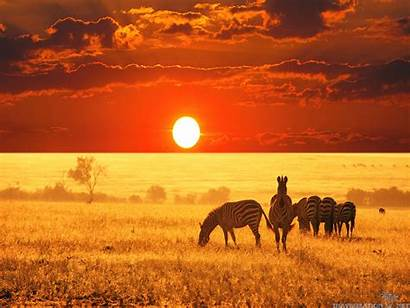 Safari African Backgrounds Animal Background Wallpapers Africa