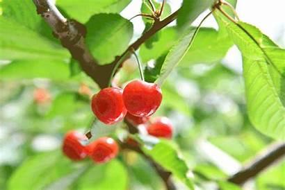 Japan Spring Yamagata Travel Experience Road Fruits