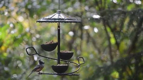 Backyard Bird Shop Locations by Chickadees Birds Unlimited Birds Unlimited