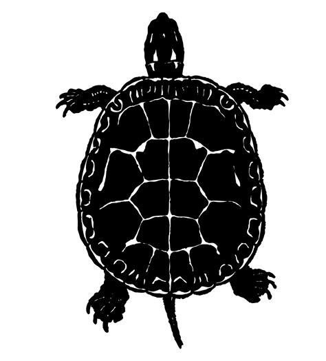 Turtle Clipart Free Stock Photo - Public Domain Pictures
