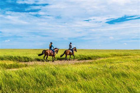 urlaub mit pferd vorbereitung ist alles