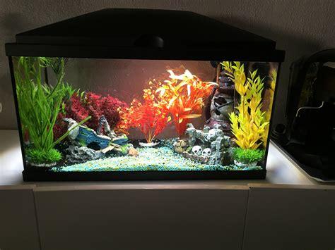 plante 224 mettre dans un aquarium sans engrais ni terre