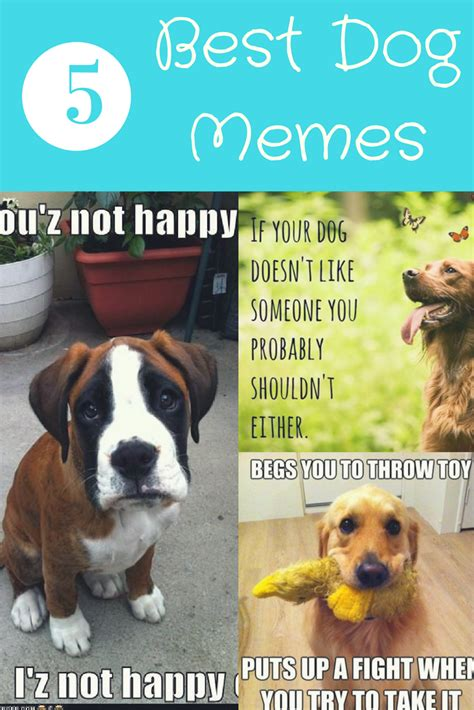 Dog Lover Meme - 5 best dog memes dogs and bark