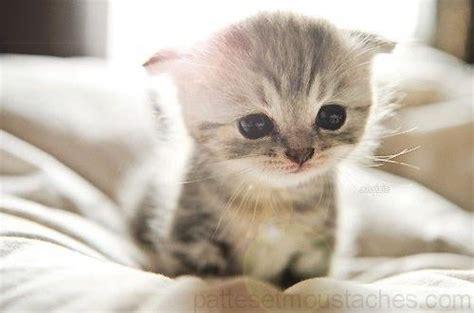 chats trop mignons photos de nos animaux